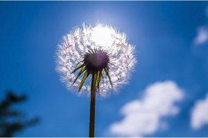flor abuelito